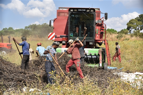 Farming in Ethiopia